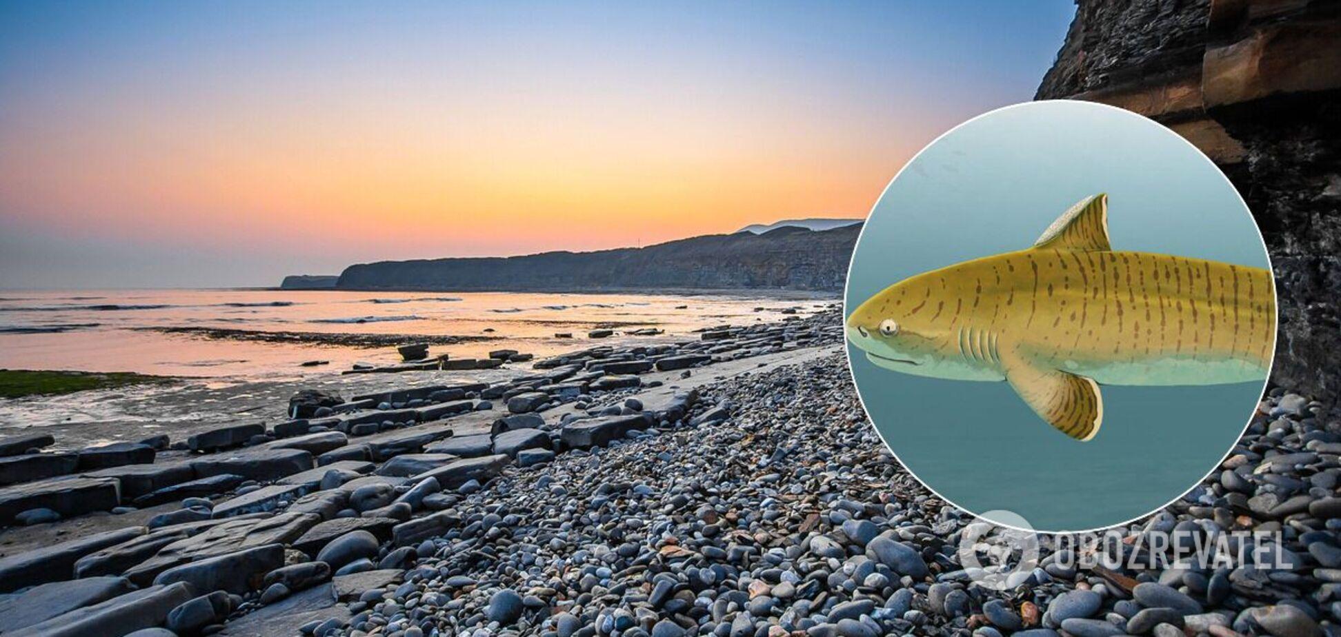 Ученые нашли окаменевший скелет древней акулы