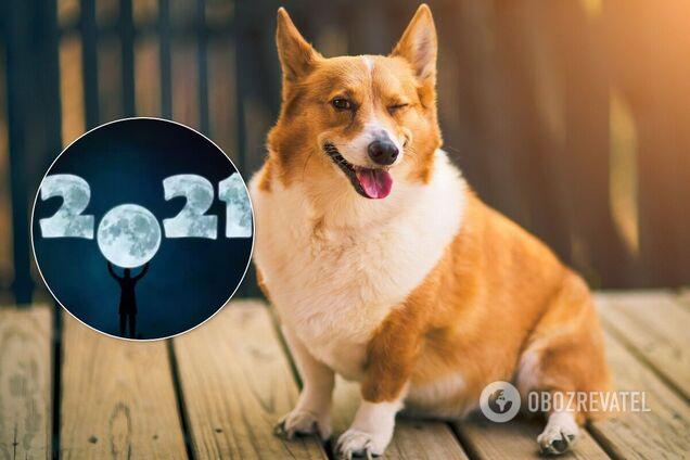 Китайський гороскоп для Собаки на 2021-й: яким буде рік