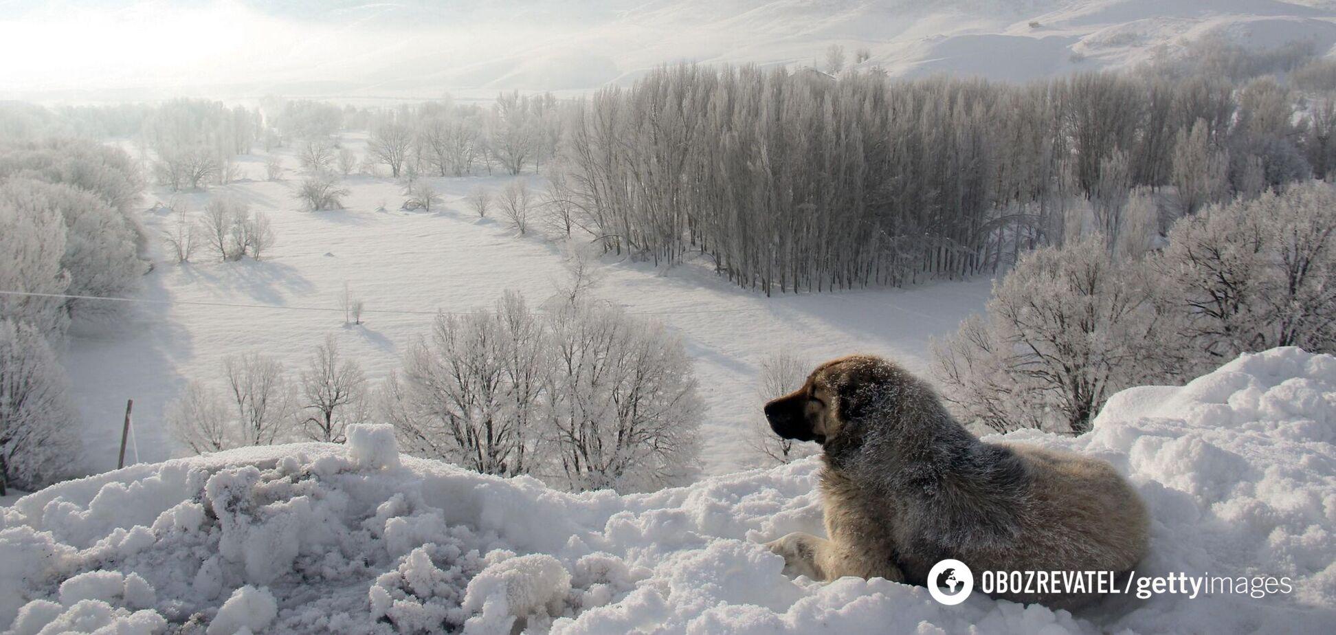 В Украину идет новое похолодание: синоптик назвал дату
