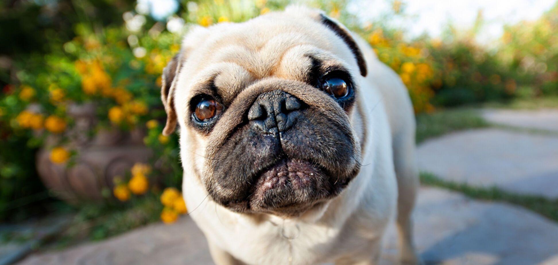 Собака отчаянным криком показала, 'как сложно жить' и стала звездой сети