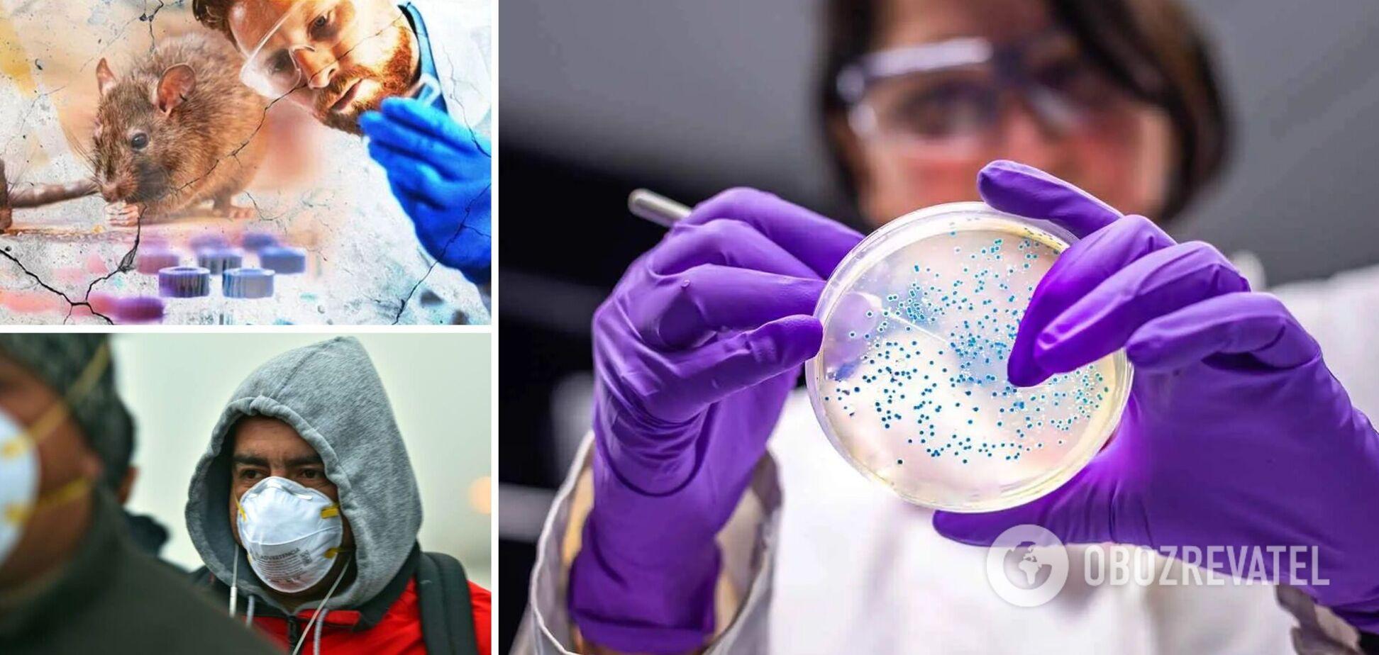 На Львовщине за последние два года зафиксировали второй случай хантавируса