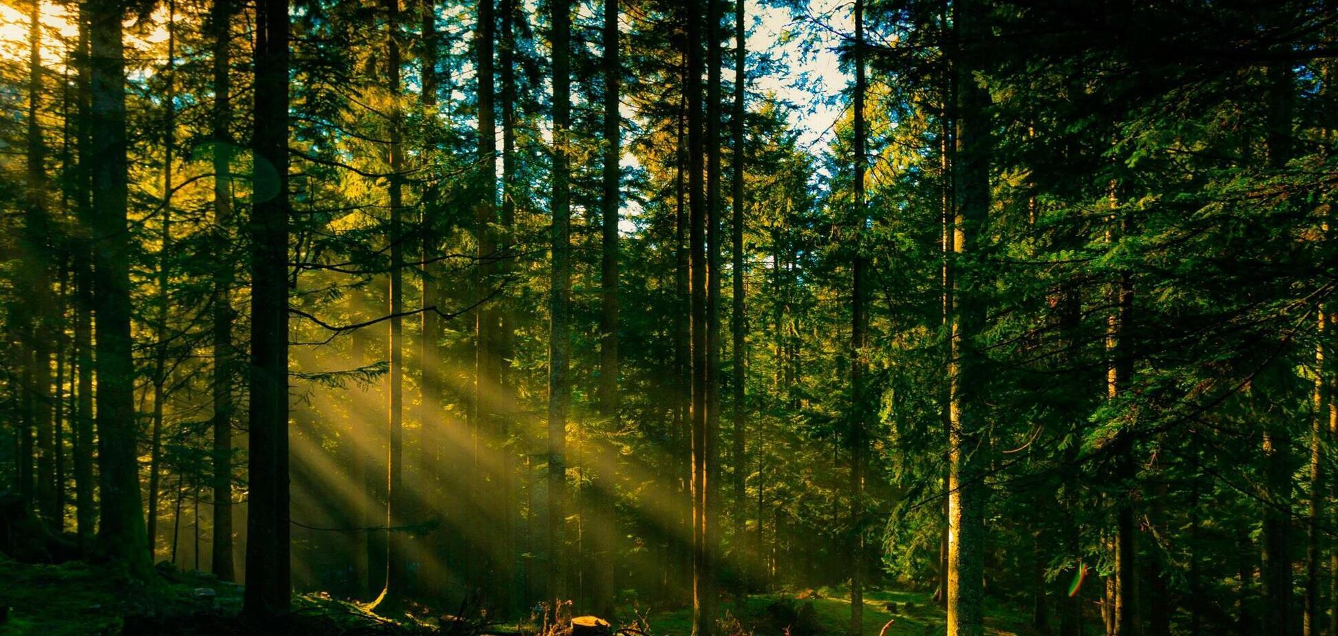 Нелегальний лісовий бізнес становить 40-45% від офіційного