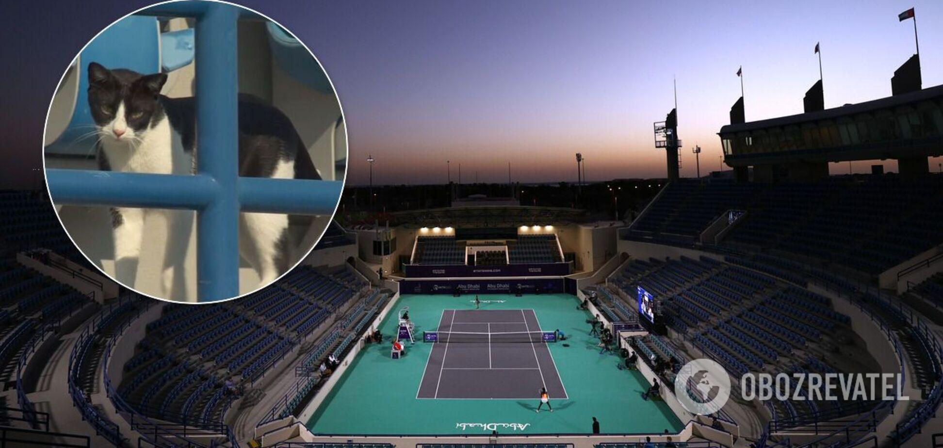 Турнир WTA в Абу-Даби