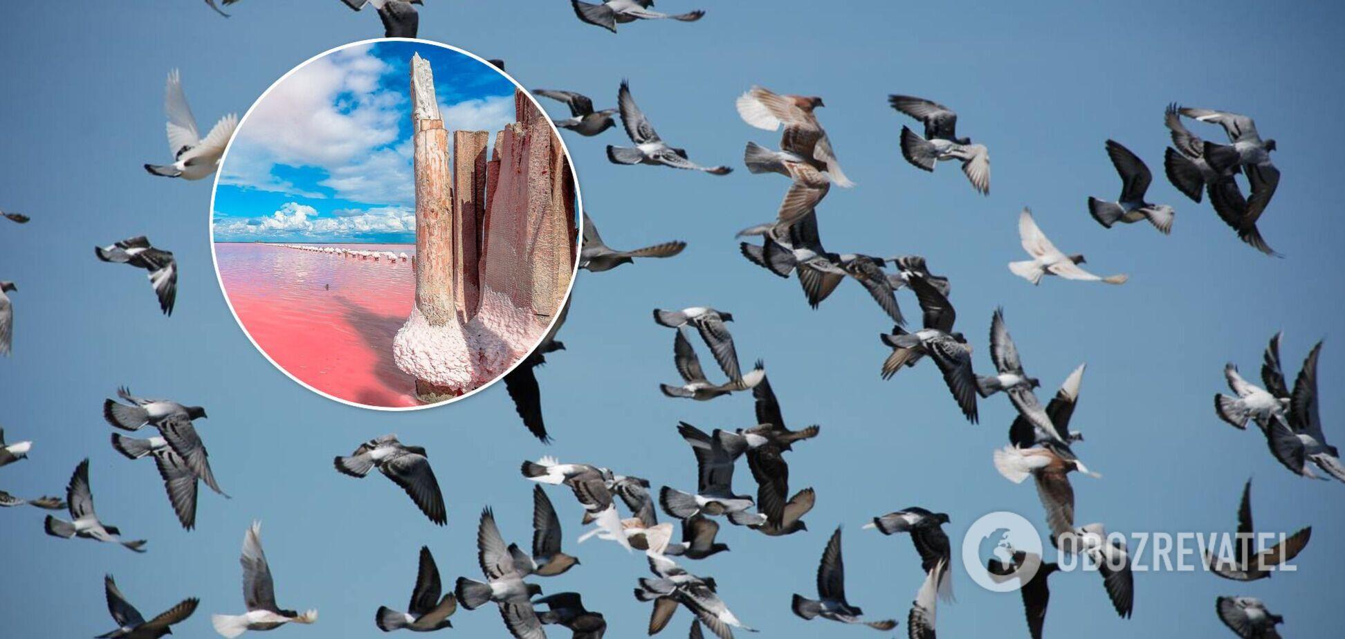 У Криму біля озера Сиваш загадково загинули тисячі птахів: названо можливу причину