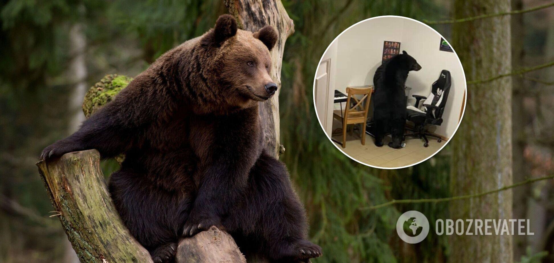 У Канаді ведмідь заліз у будинок, щоб поїсти пластівців. Фото