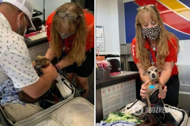 Американцы едва не убили собаку, забыв ее в чемодане. Фото