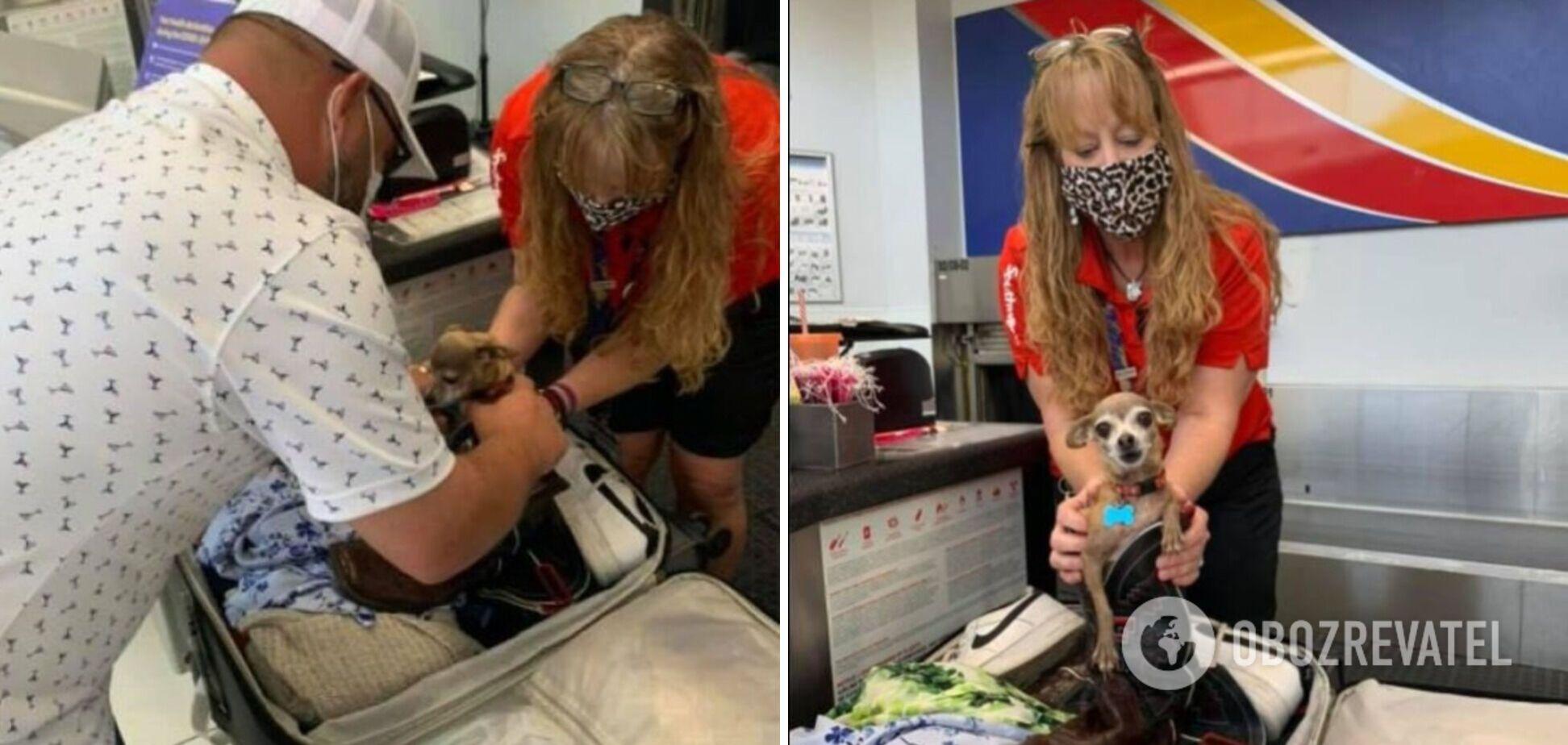 Американці ледь не вбили собаку, забувши її в валізі. Фото
