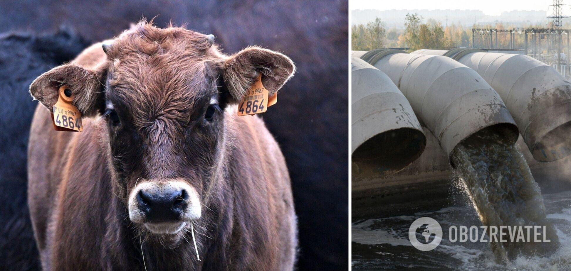 У Британії десятки тисяч літрів молока виливають в каналізацію
