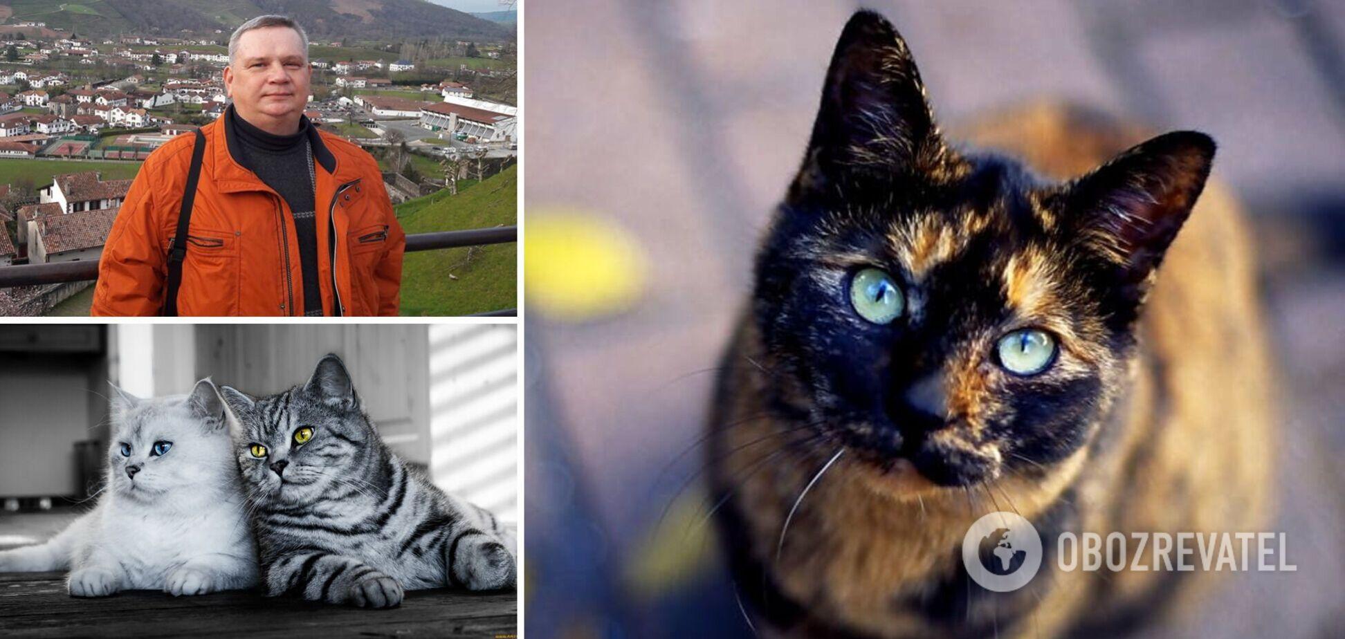 Приметы с кошками: Мехеда рассказал, что они несут хозяевам