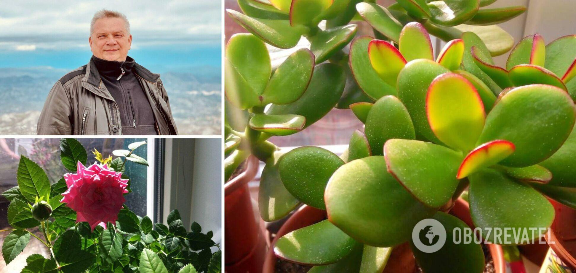 Кімнатні рослини і прикмети: Мехеда пояснив, як вони впливають на людей