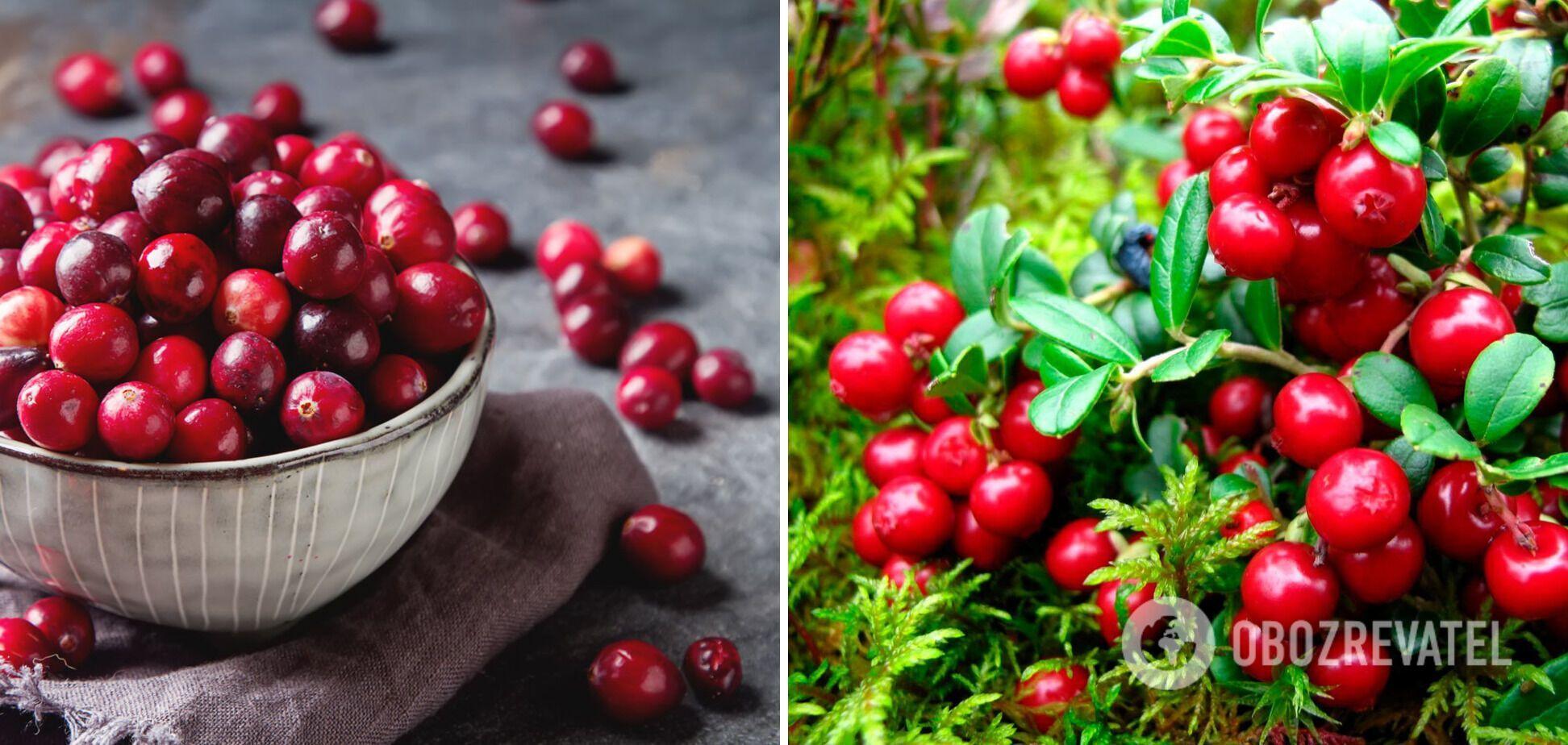 Клюква: удивительные свойства чудо-ягоды