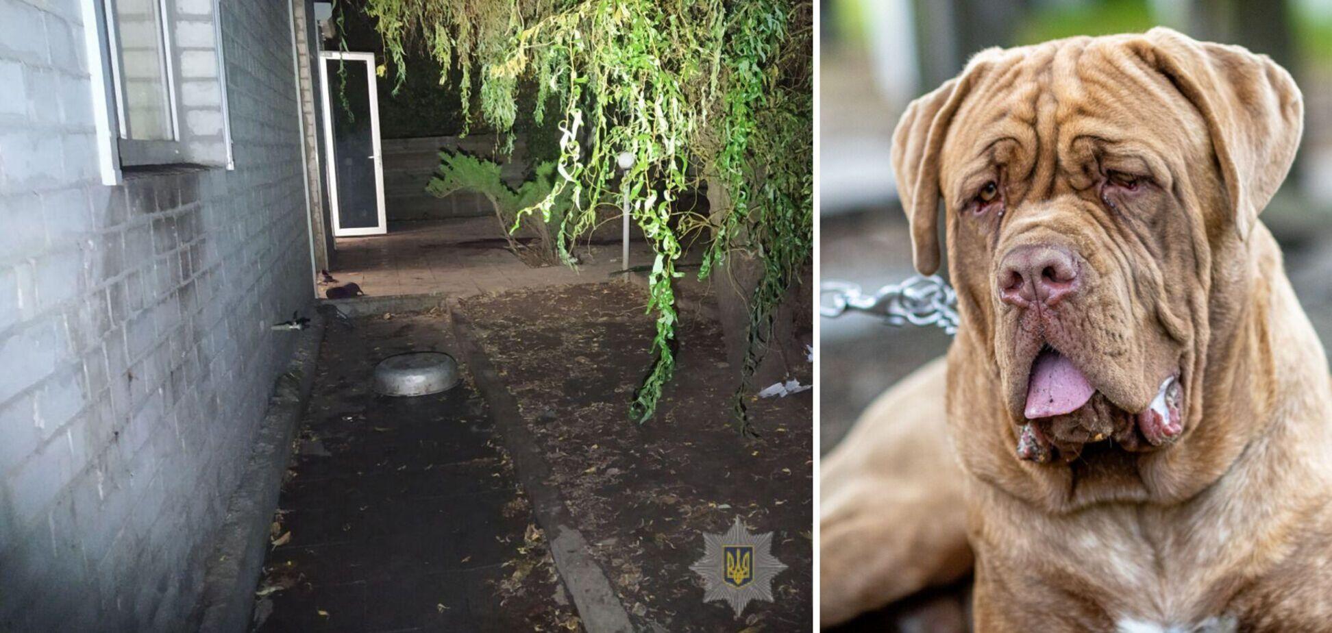 У Харкові бійцівські собаки загризли 81-річну матір власниці. Фото