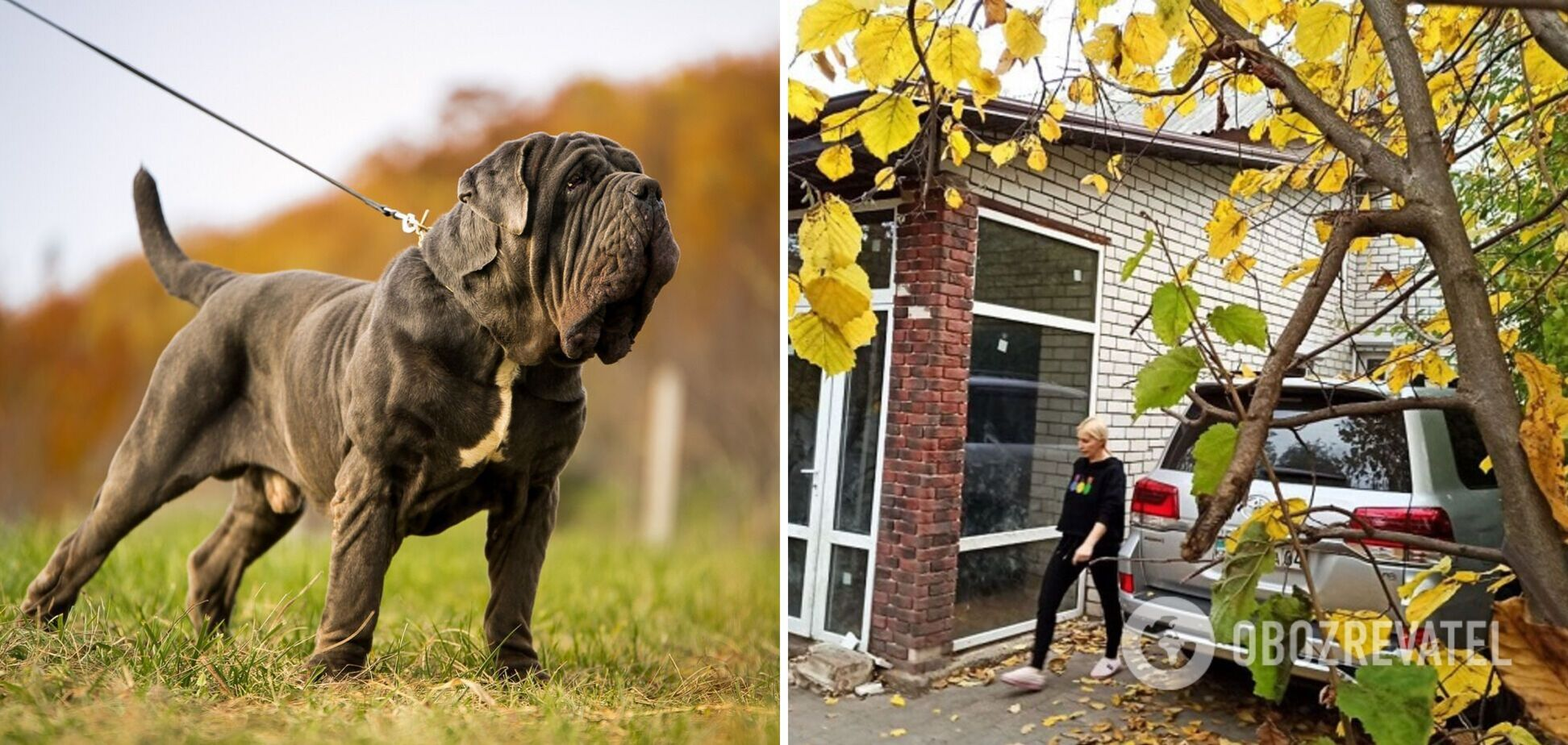 Тваринами ніхто не займався: з'ясувалися деталі загибелі жінки від нападу бійцівських псів у Харкові