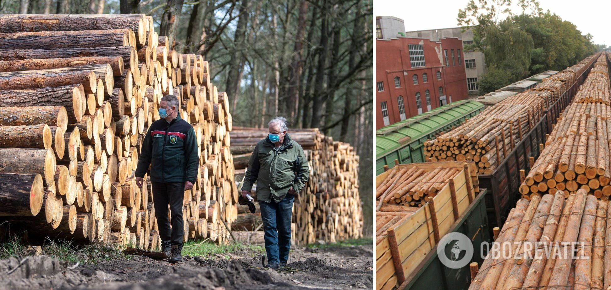 Об отмене моратория на экспорт леса-кругляка: хотим стать сырьевой колонией?