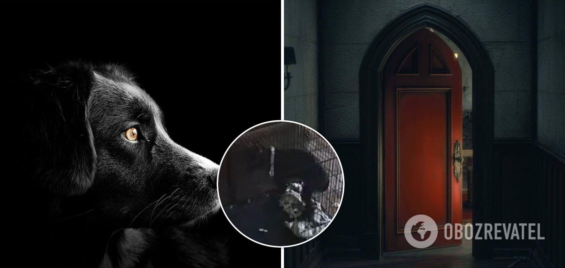 Сеть всполошили кадры нападения полтергейста на собак. Видео