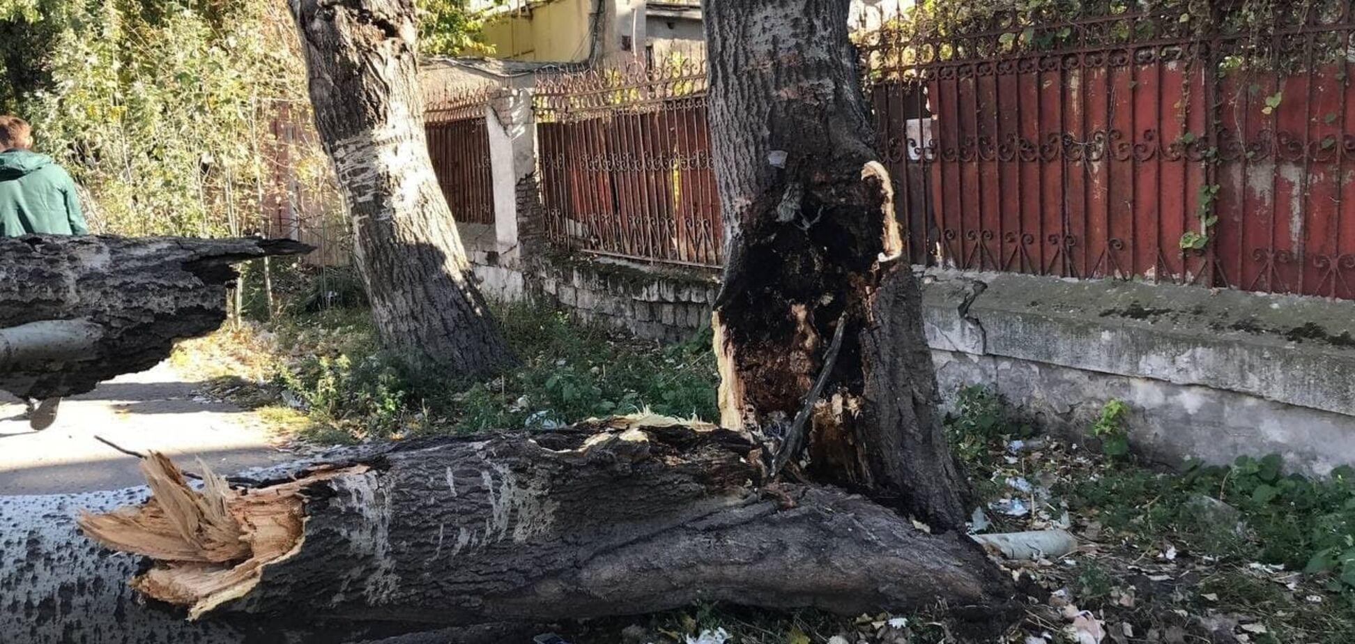 Дерево впало на авто в Одесі на Французькому бульварі