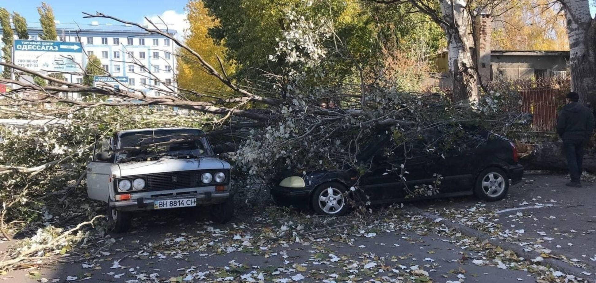 В Одесі на Пересипу дерево привалило машини