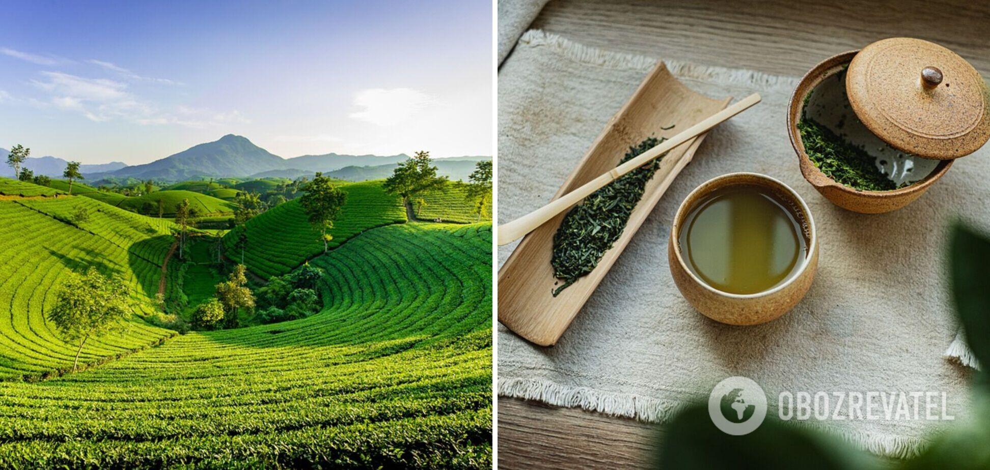 Зелений чай перед сном: пити чи не пити