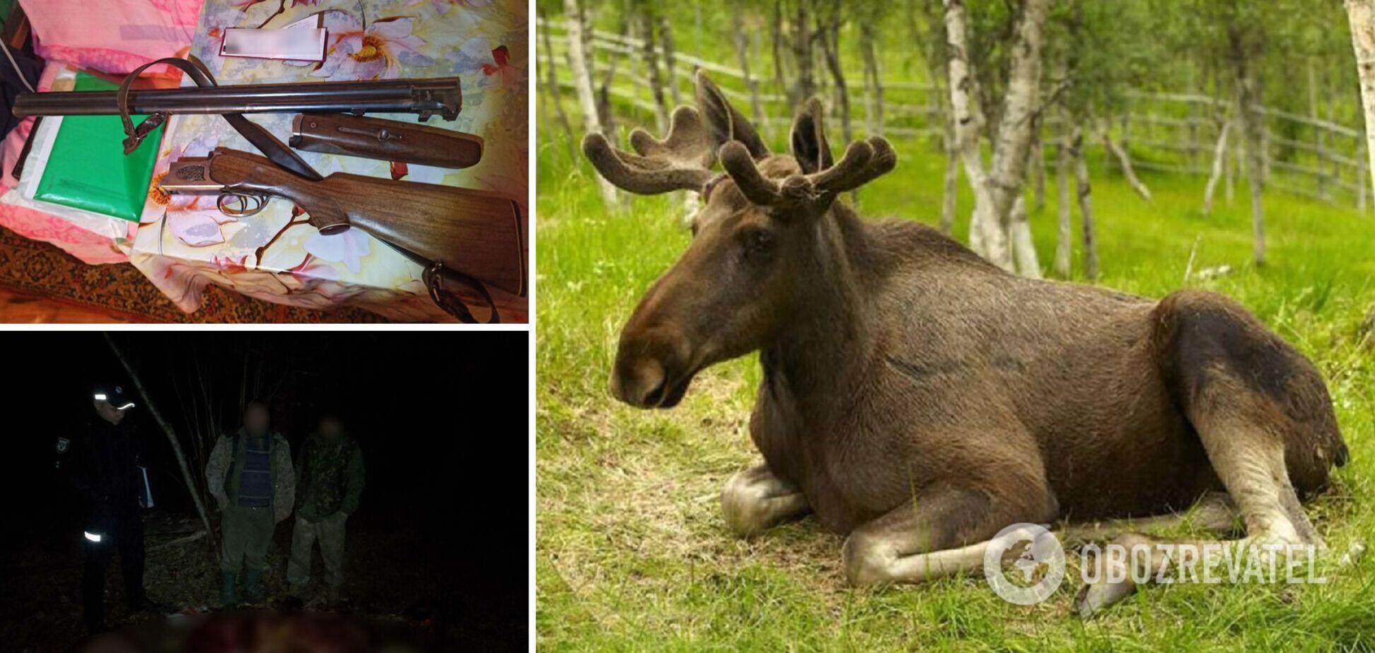 На Черниговщине убили лося: лесник засек четырех мужчин, один умер при попытке бегства. Детали и фото