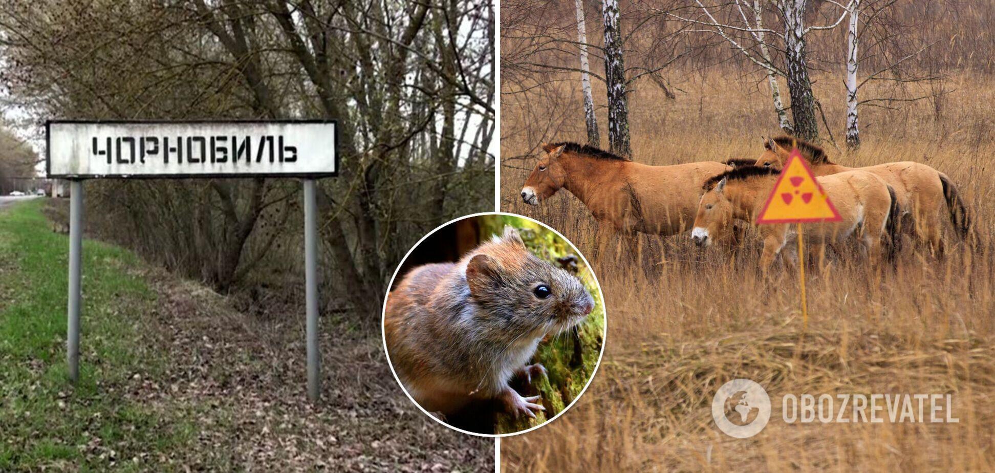Чернобыльские животные помогают ученым понять, что произошло бы с человеком в этих условиях