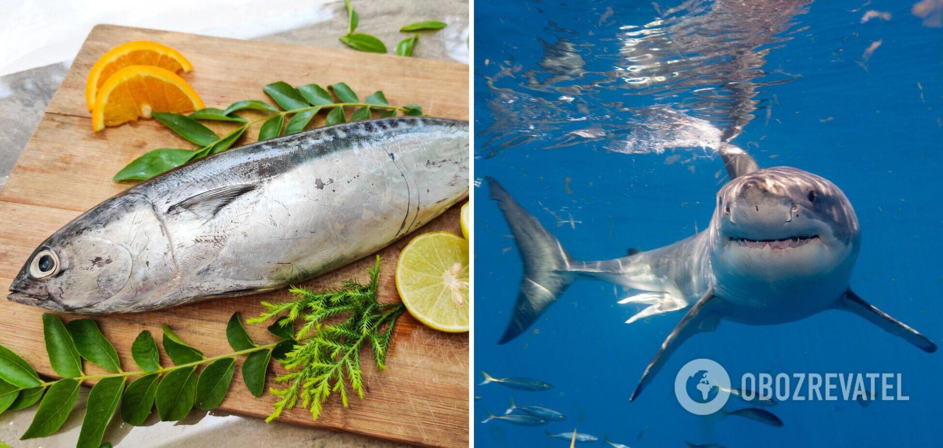 Окунь, акула, тунець: 10 видів риби, які краще не їсти – фахівець з інституту здоров'я