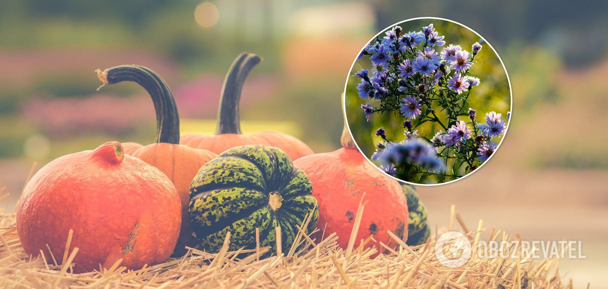 Посівний календар садівника та городника - листопад 2021 року - Україна