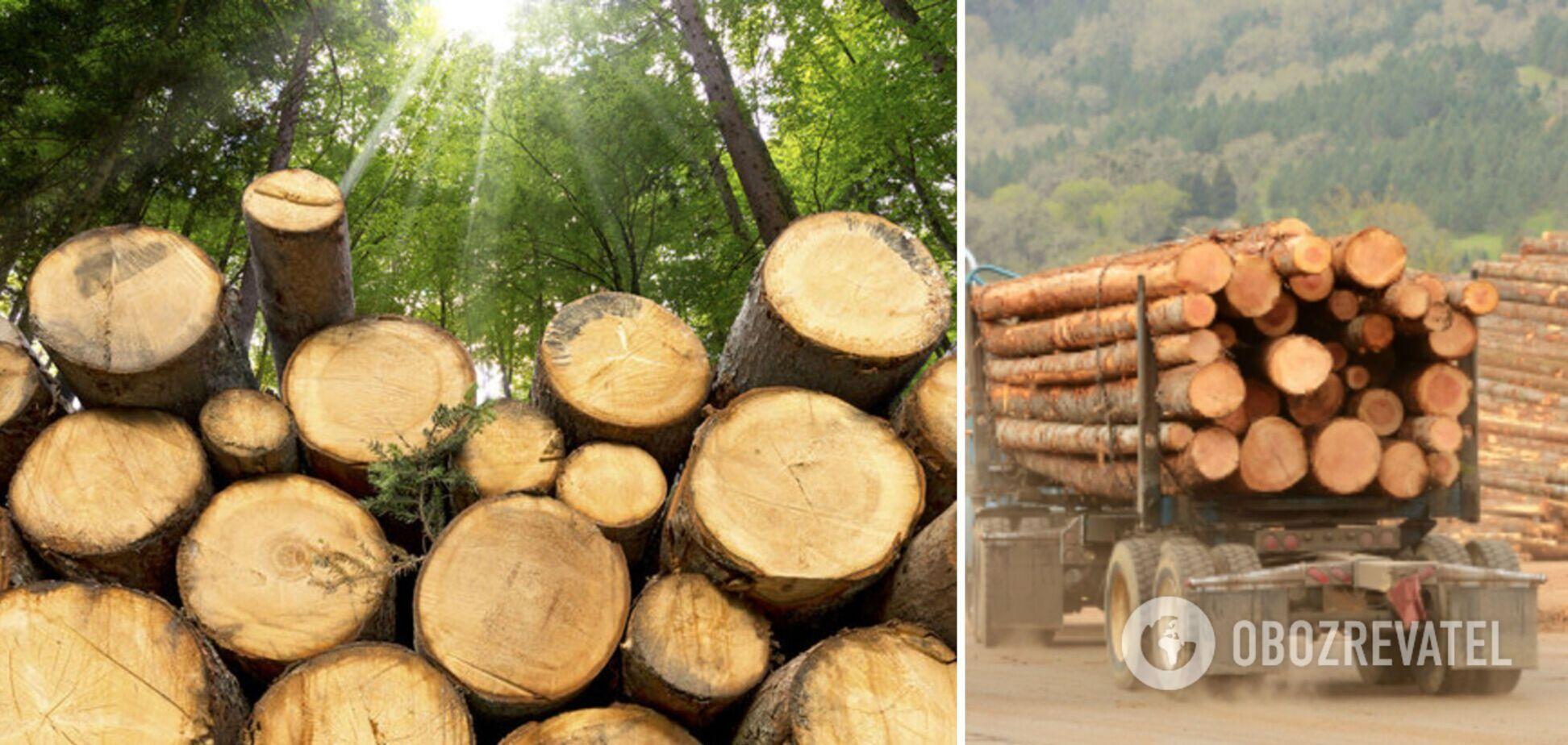 Украина – не сырьевая колония: почему мораторий на экспорт леса касается каждого гражданина