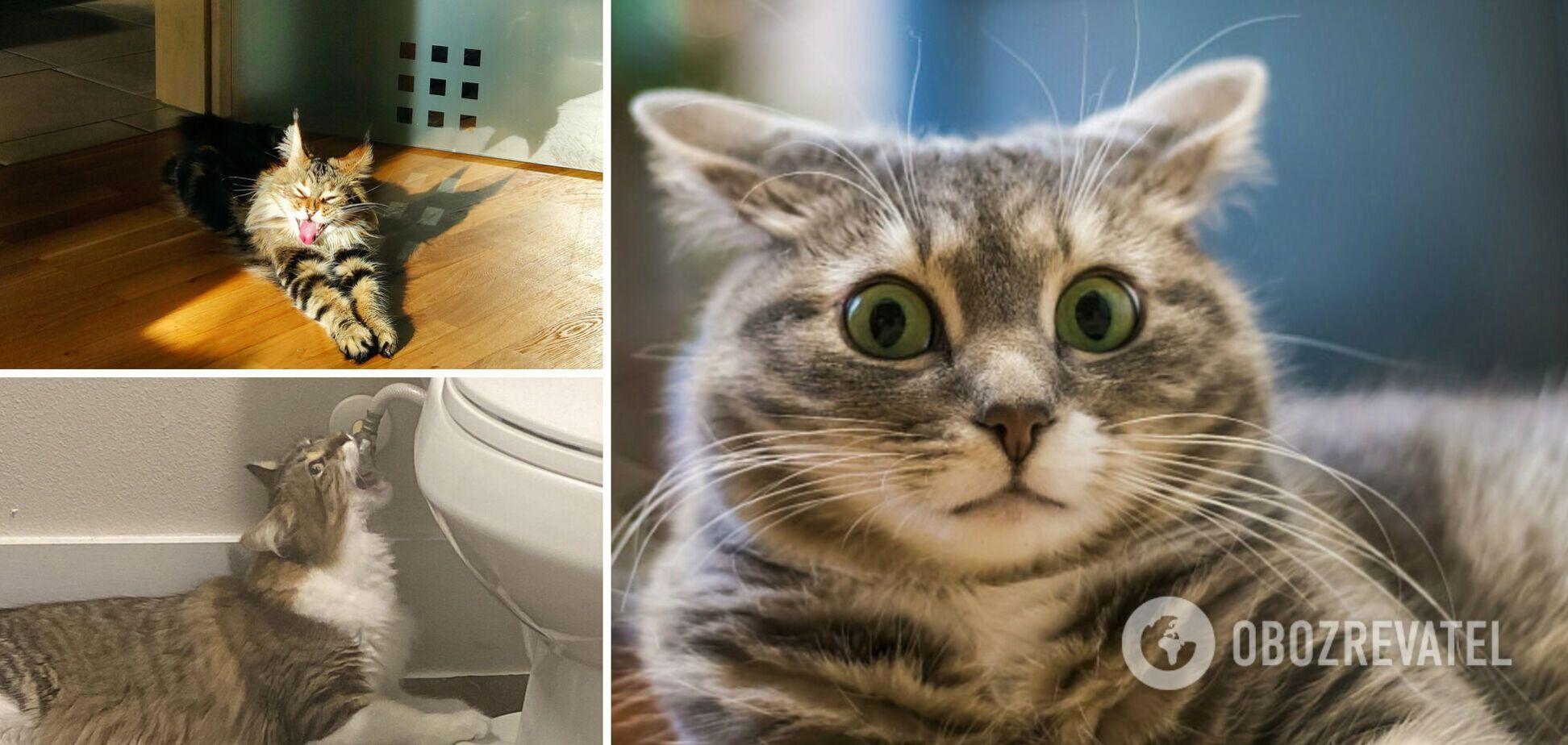 Забавные коты рассмешили сеть