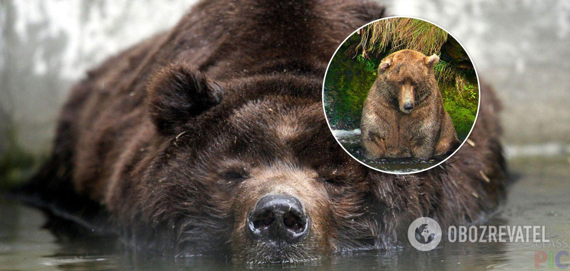 На Алясці вибрали найтовщого ведмедя, який ловить рибу лежачи. Фото