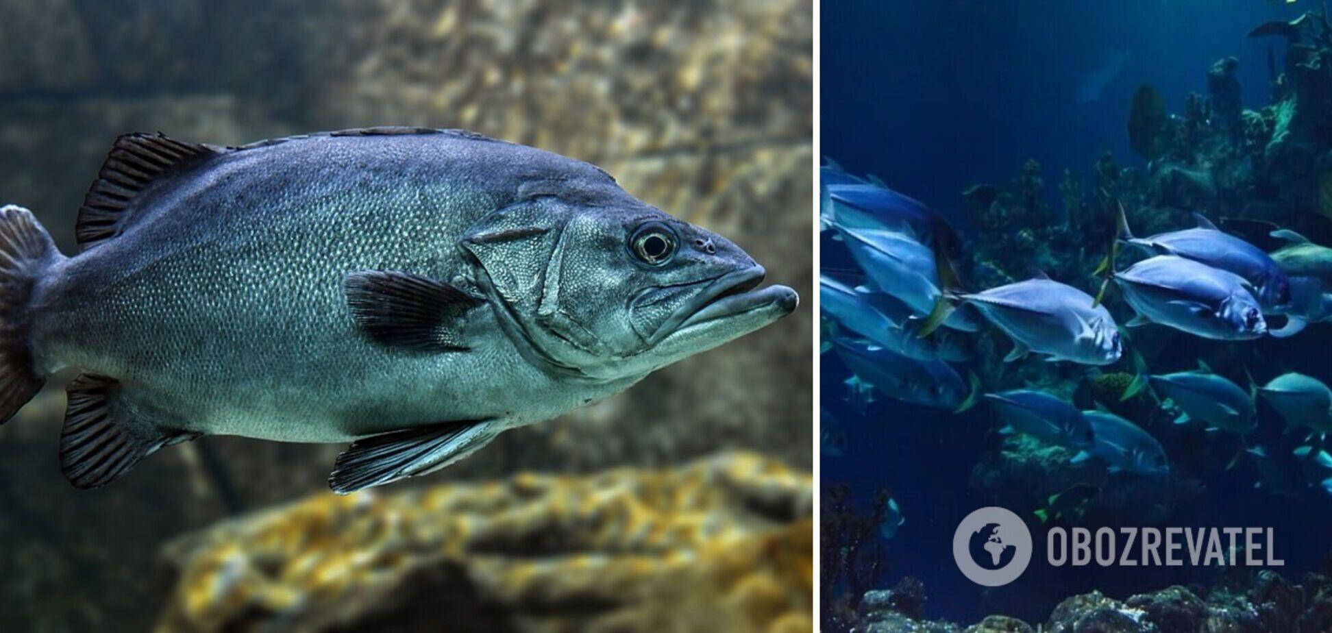 Вчені назвали найкориснішу рибу і пояснили чому