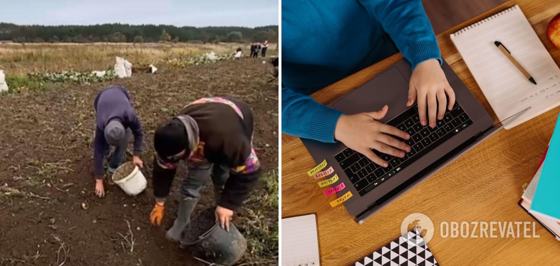 Замість навчання онлайн – діти збирають картоплю