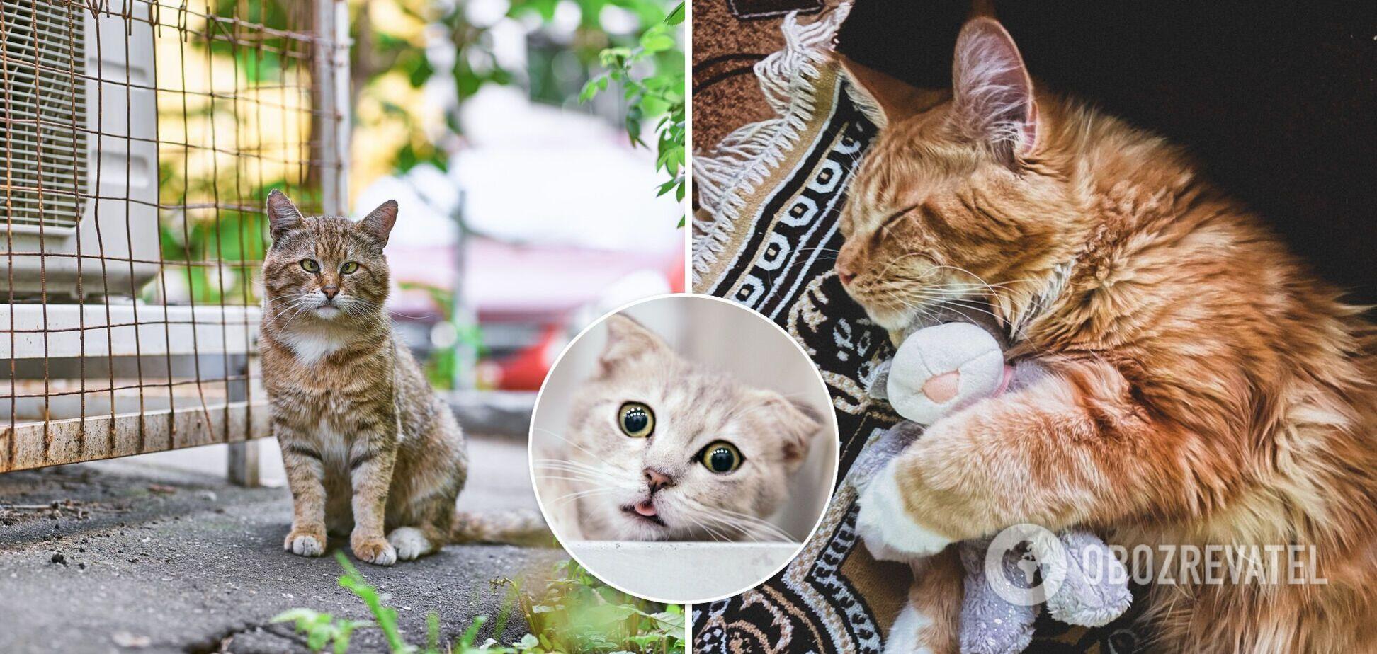 Милі котики