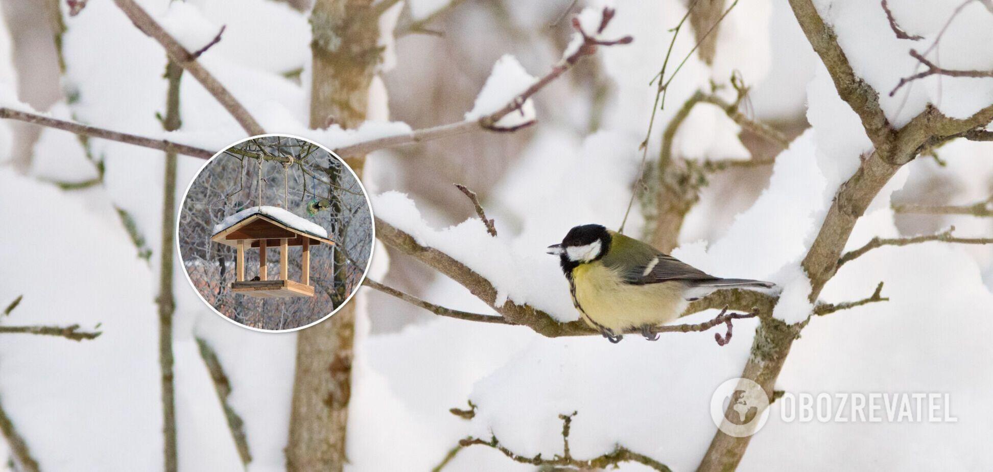 Чем кормить птиц