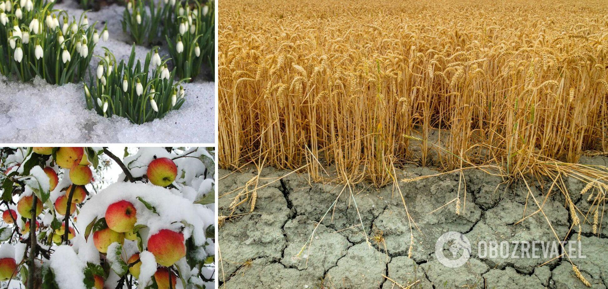 Україні загрожують серйозні проблеми з урожаєм: метеорологи назвали ризики снігового апокаліпсису й дали прогноз на весну
