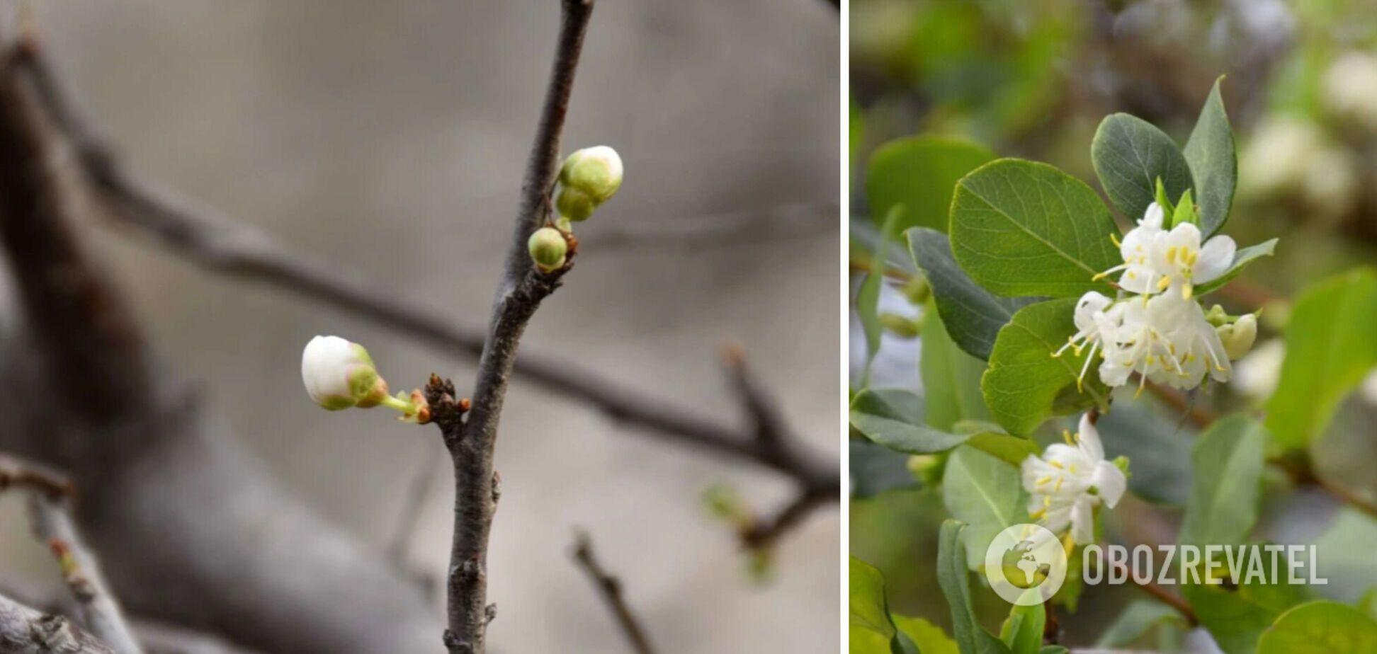 Квітучі дерева в Криму