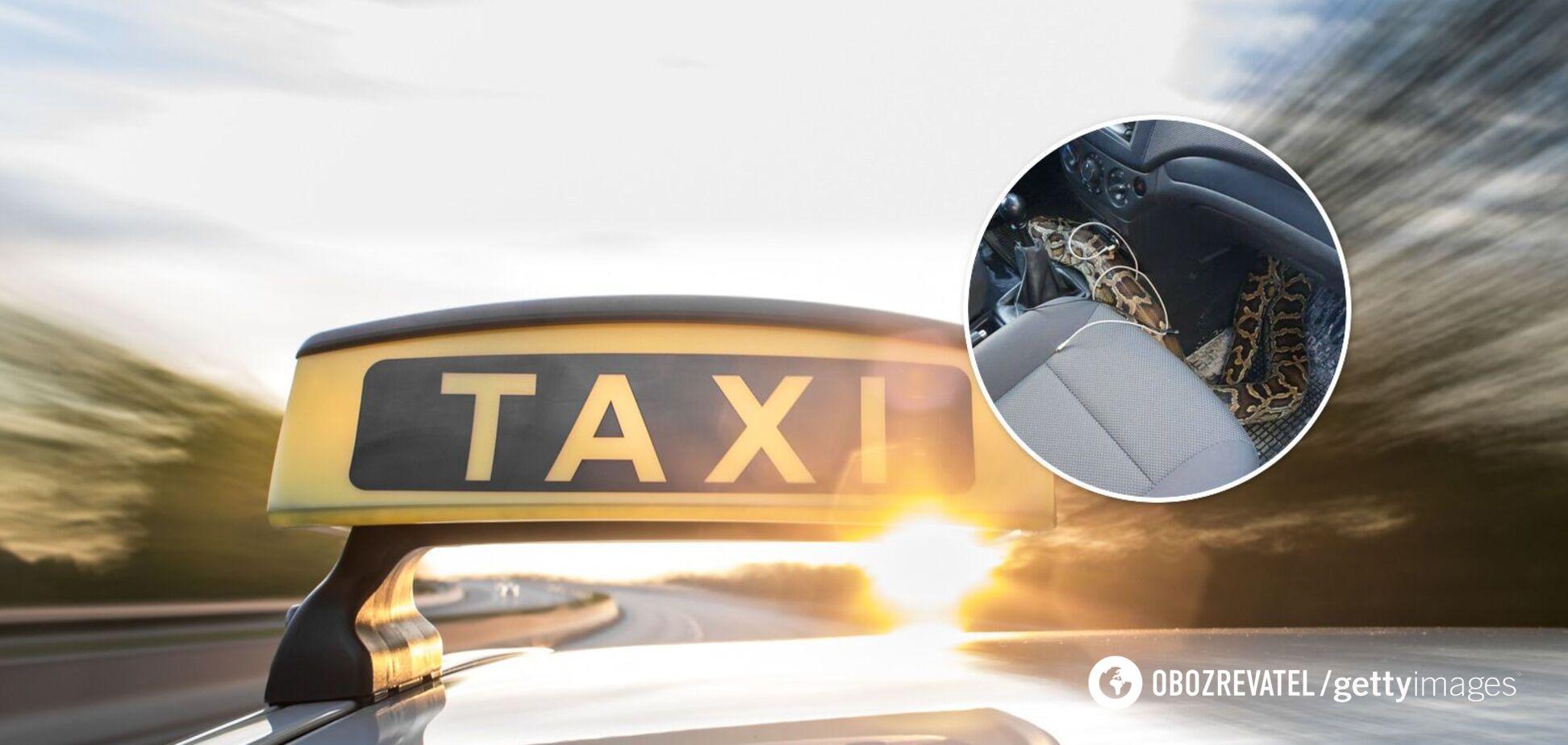 У Харкові з сумки, яку доставляв таксист, виповзла величезна змія. Фото