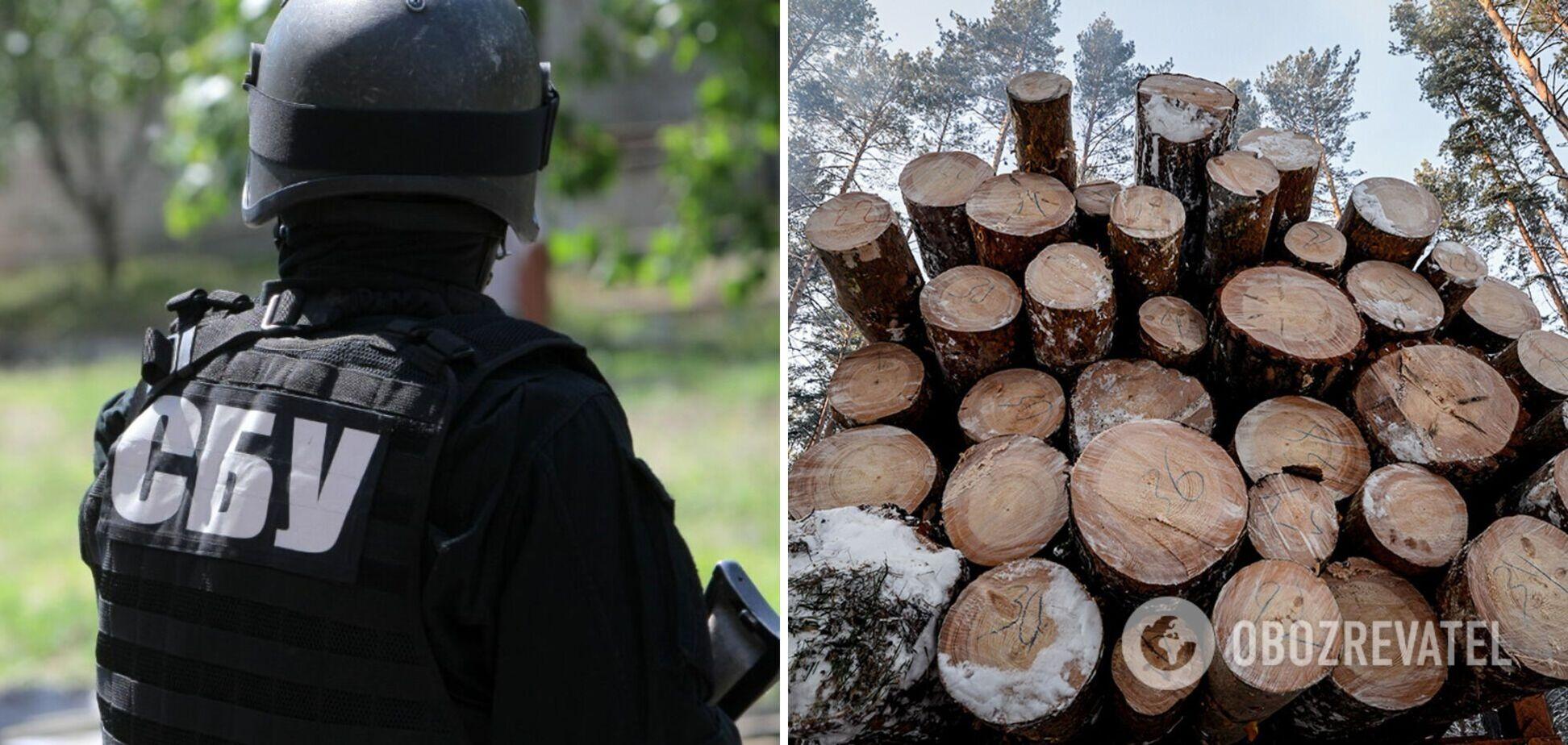 СБУ заблокировала вывоз партии ценной древесины в ЕС