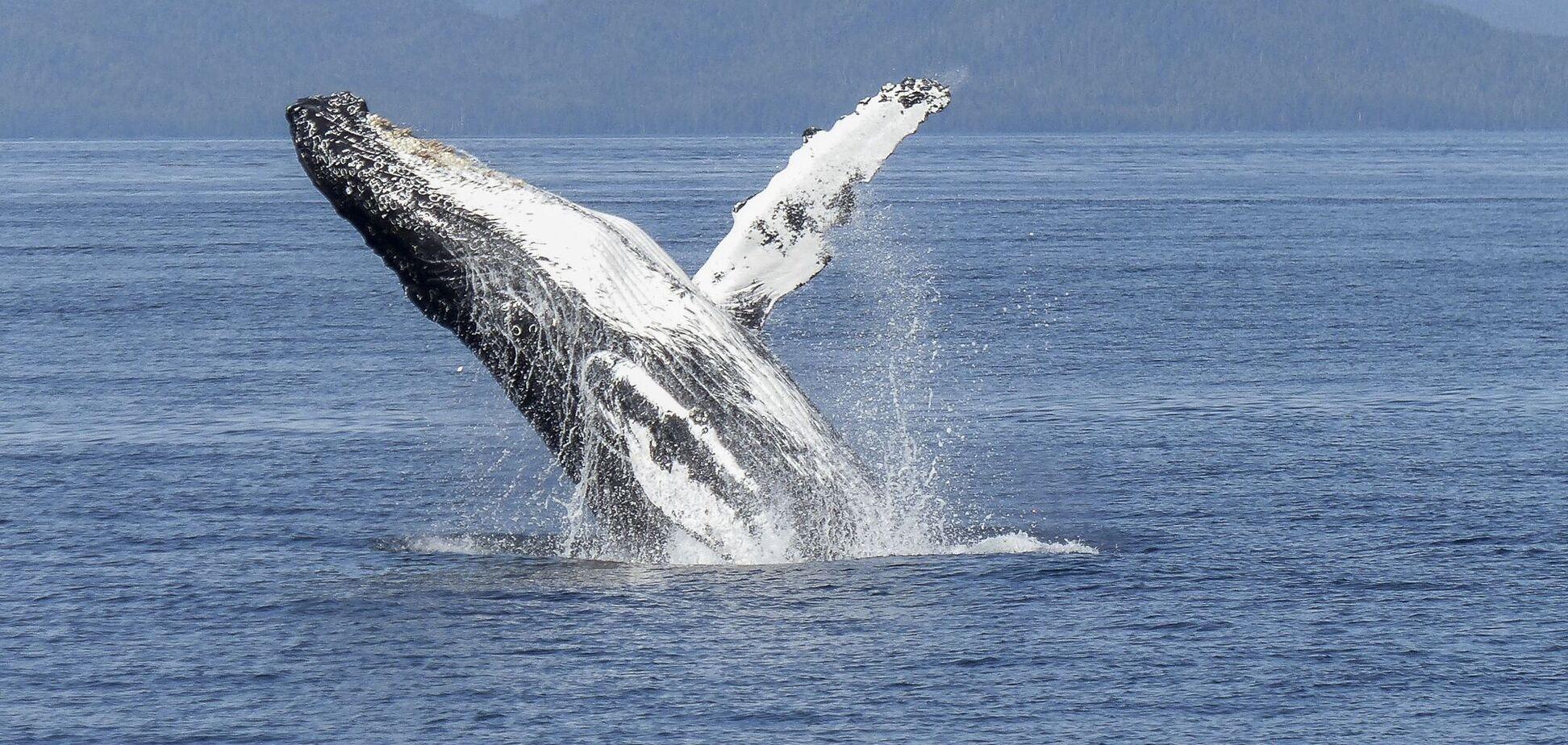 За одну секунду киты вдыхают около 2 тысяч литров воздуха