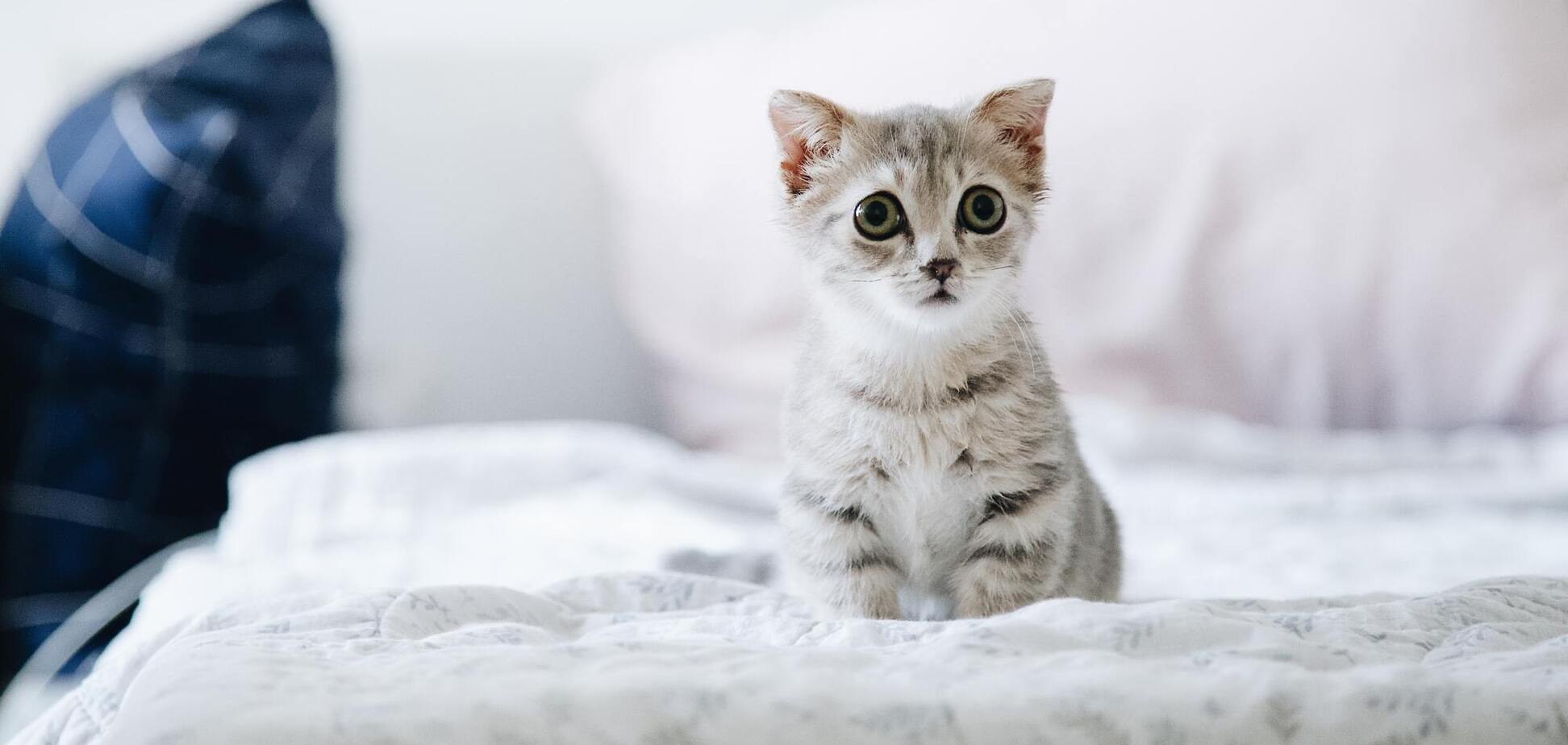 Кіт заплакав на камеру, коли залишився сам удома. Відео