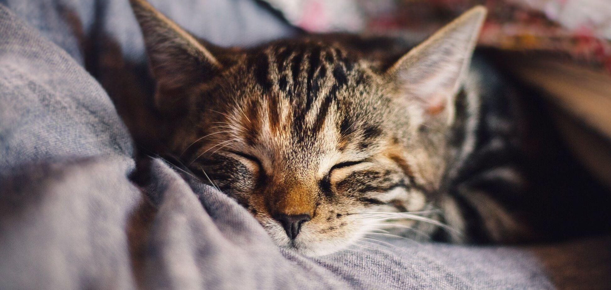 У країнах Балтії кіт уперше заразився COVID-19