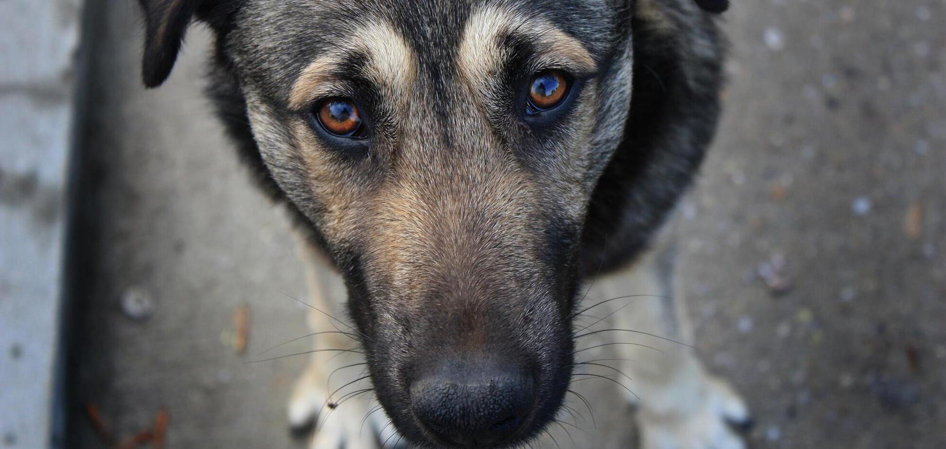 В Італії собака врятував життя господареві, який тиждень лежав із переломом у горах