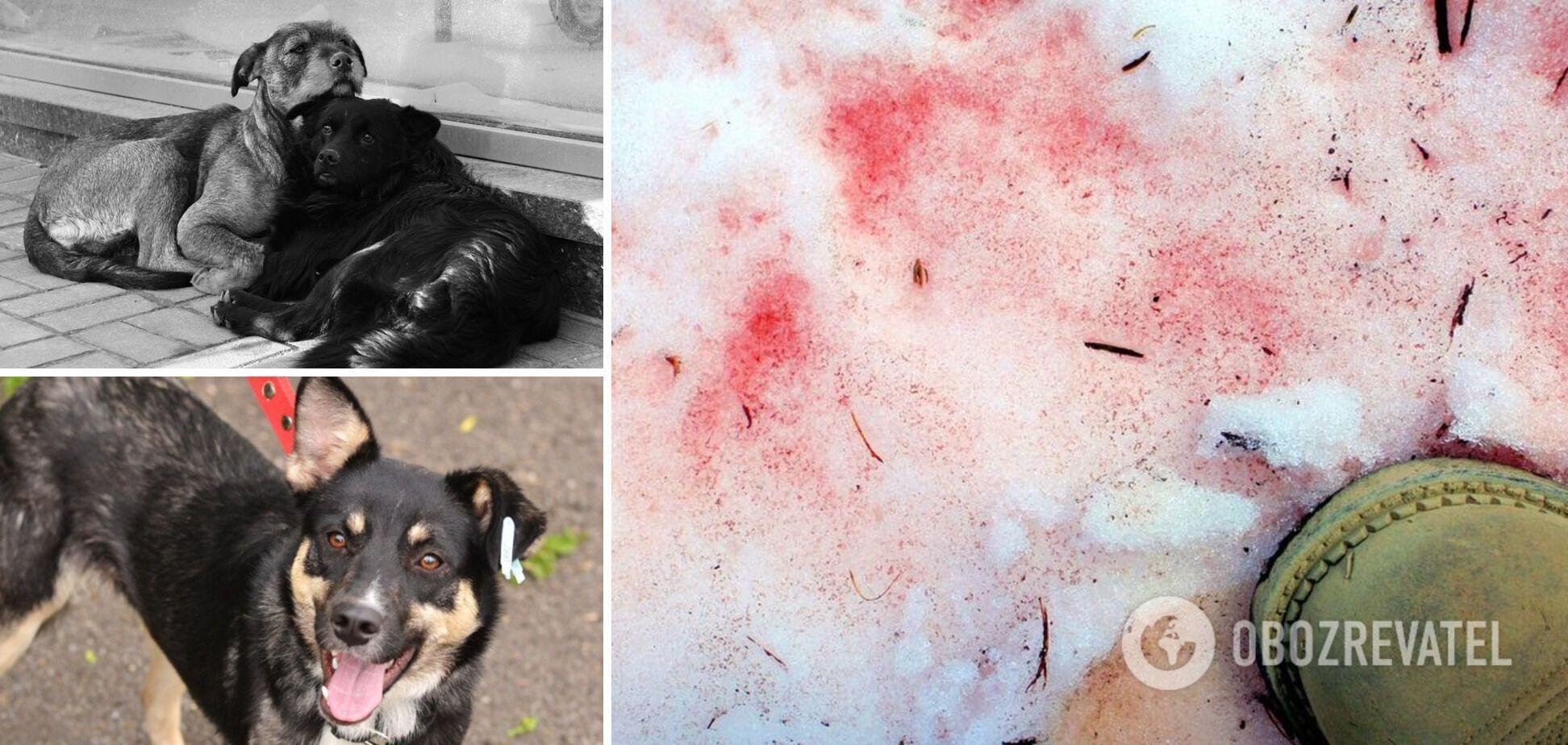 В Киеве переполох из-за отравления собак 'розовым снегом': как уберечь домашних любимцев