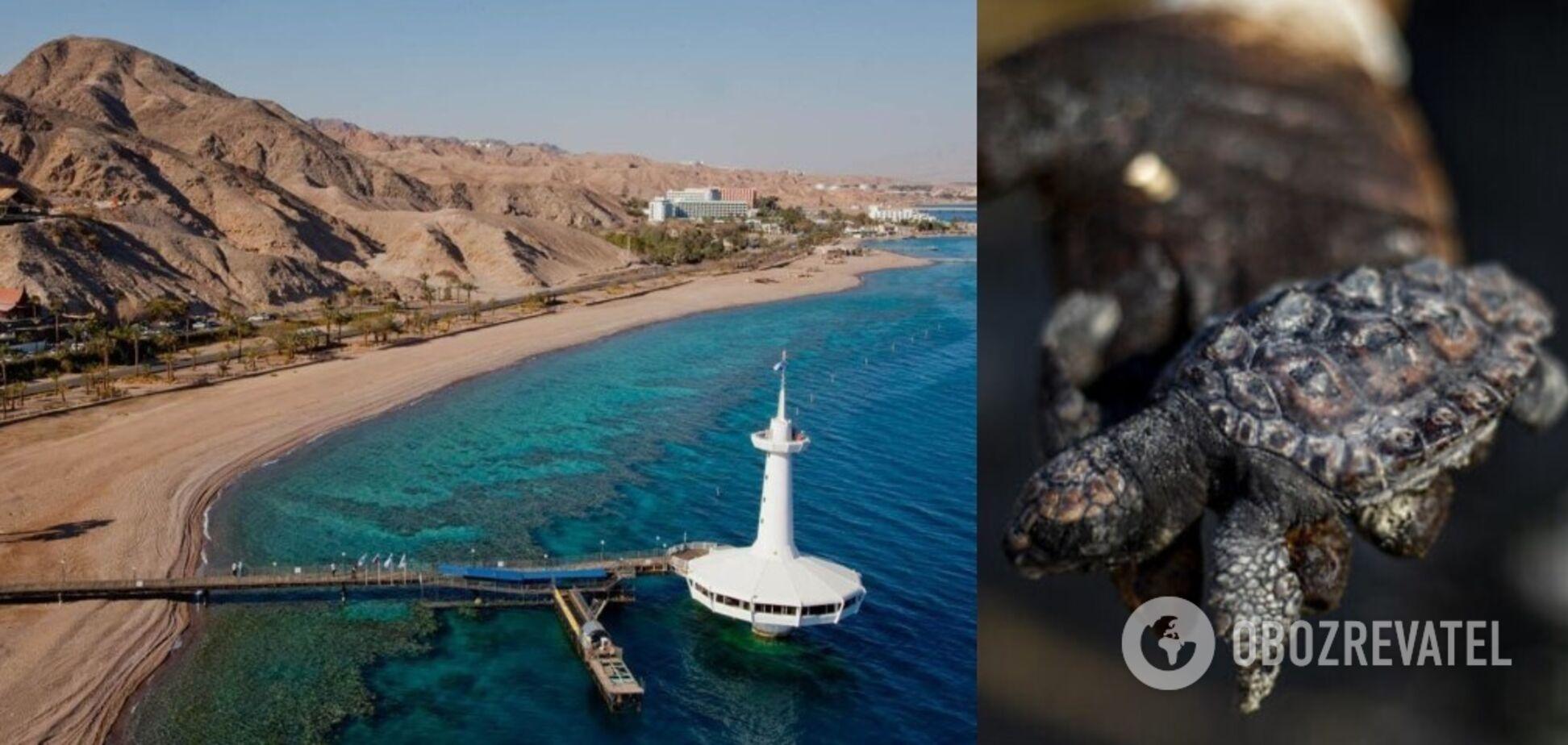 Израилю грозит экологическая катастрофа из-за разлива нефти