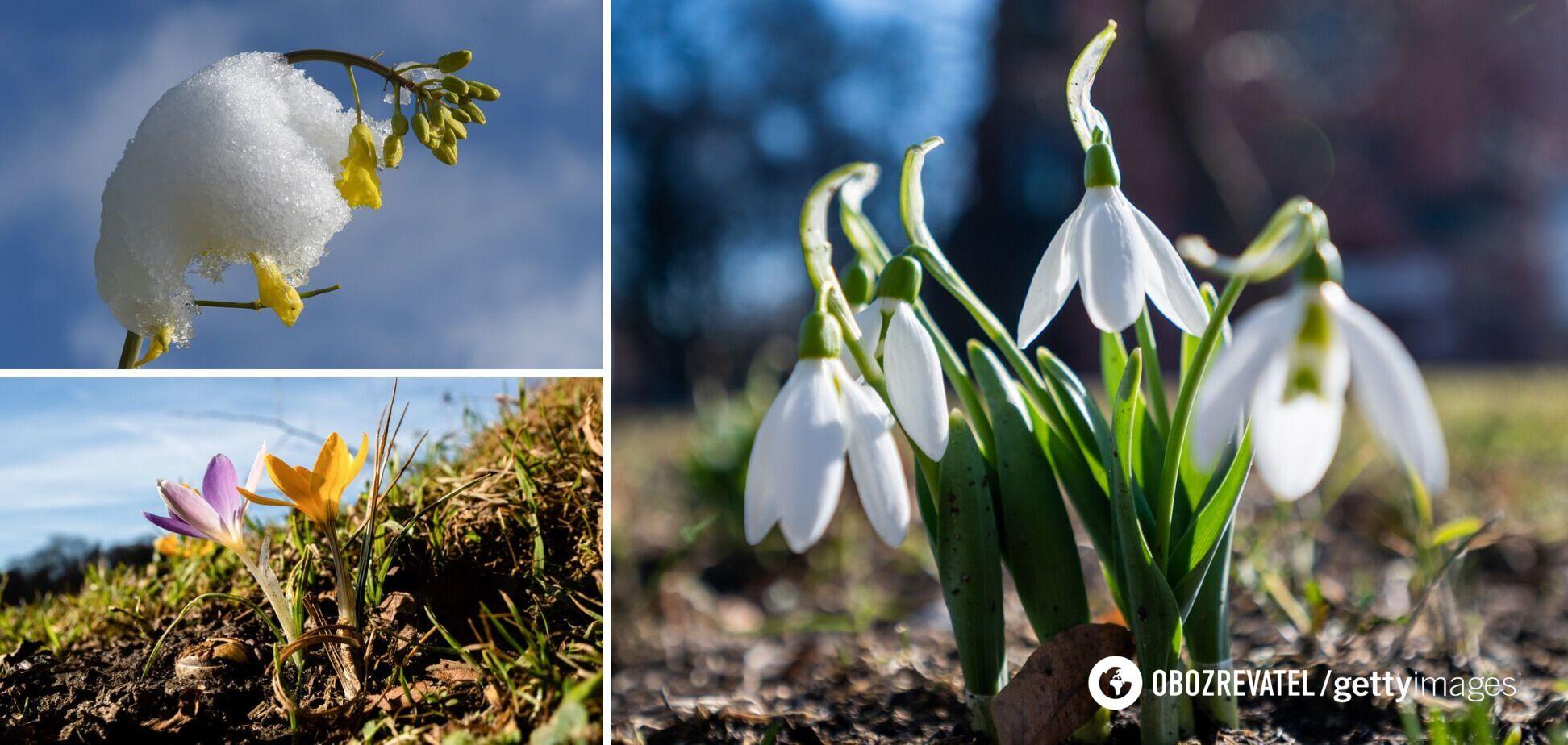 В Украину идет потепление, снег быстро исчезнет: синоптик сказала, когда наступит настоящая весна