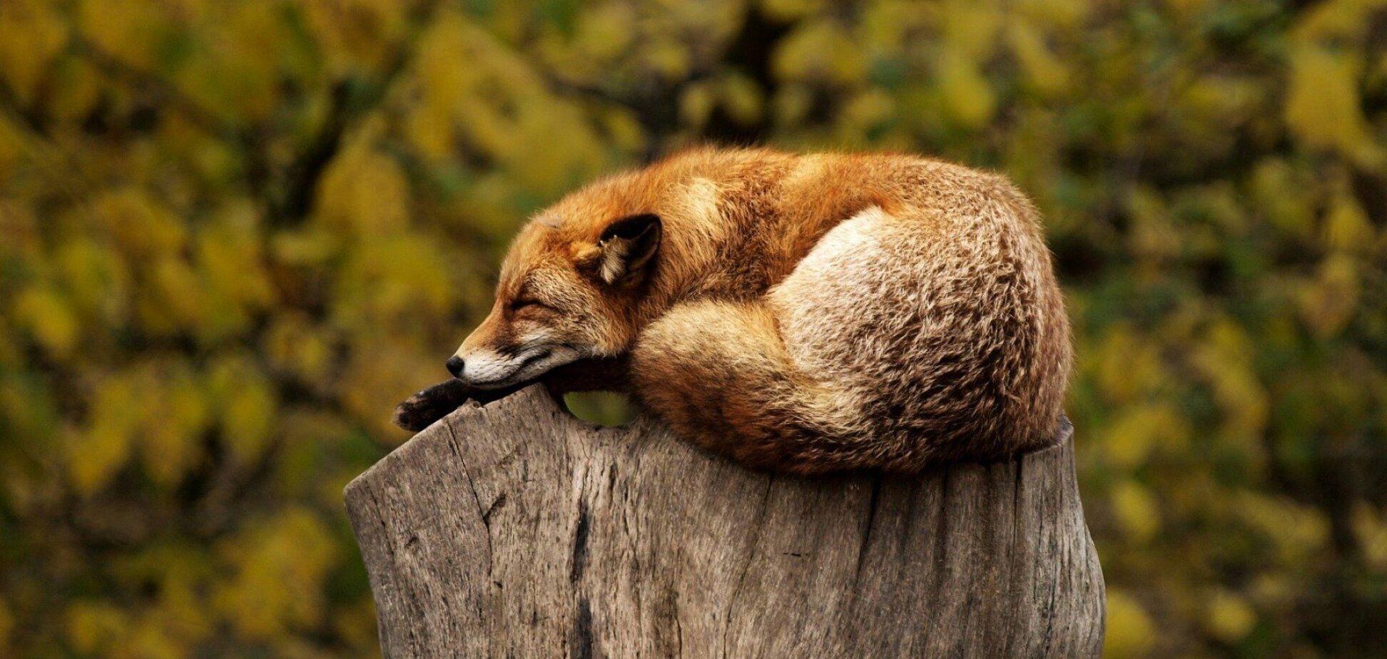 Названы лучшие способы, которые помогут выспаться