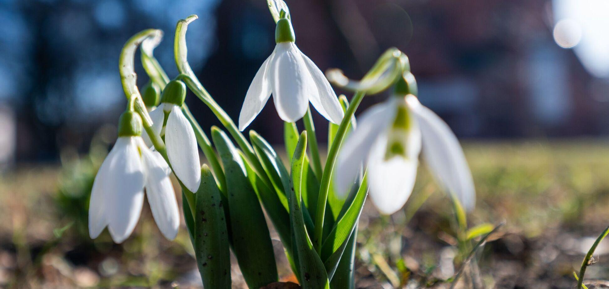 Справжня весна в Україні настане у другій половині березня