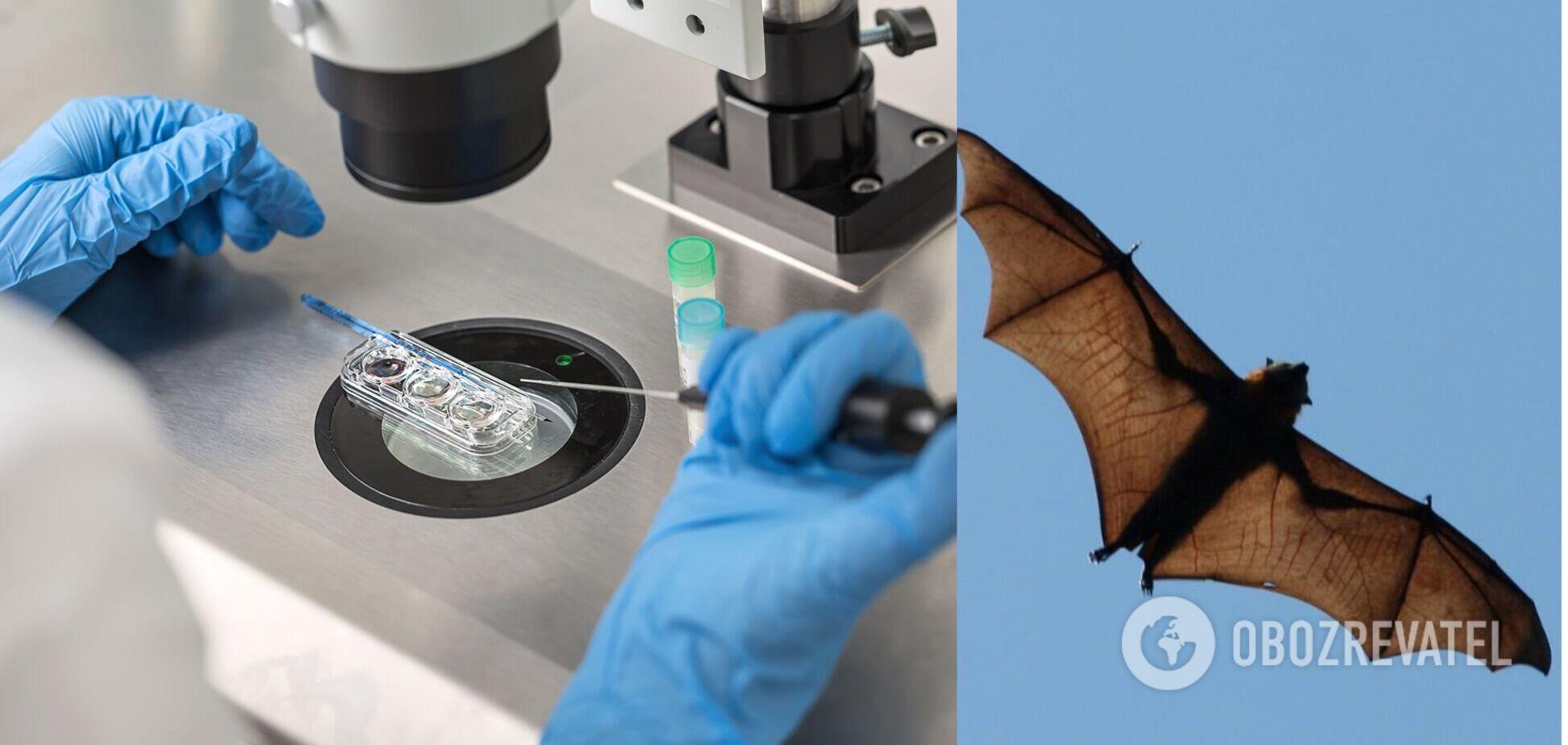 Вчені попередили про загрозу нової смертоносної пандемії від кажанів і свиней