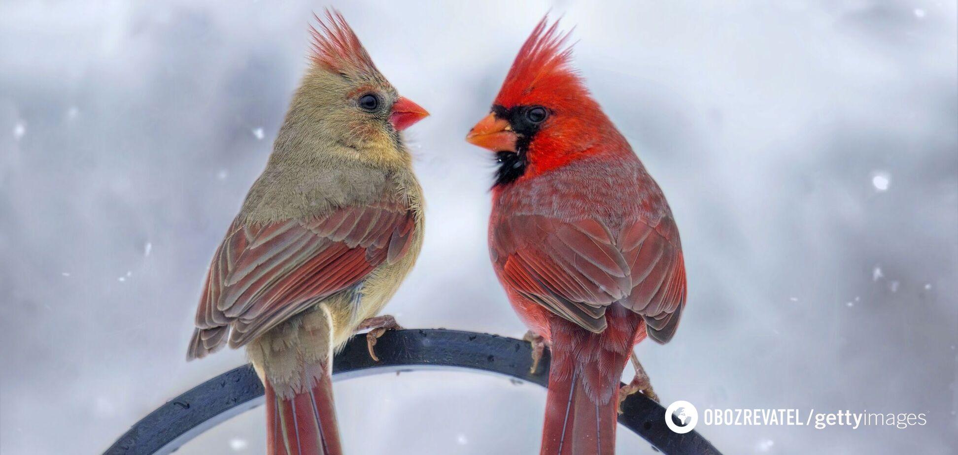 В США нашли редкую птицу
