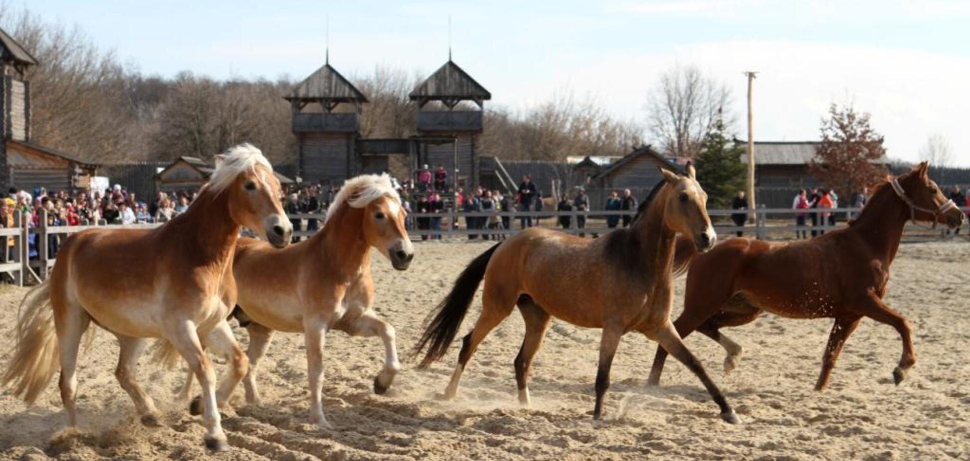Под Киевом пройдет средневековый конное шоу с мастер-классами