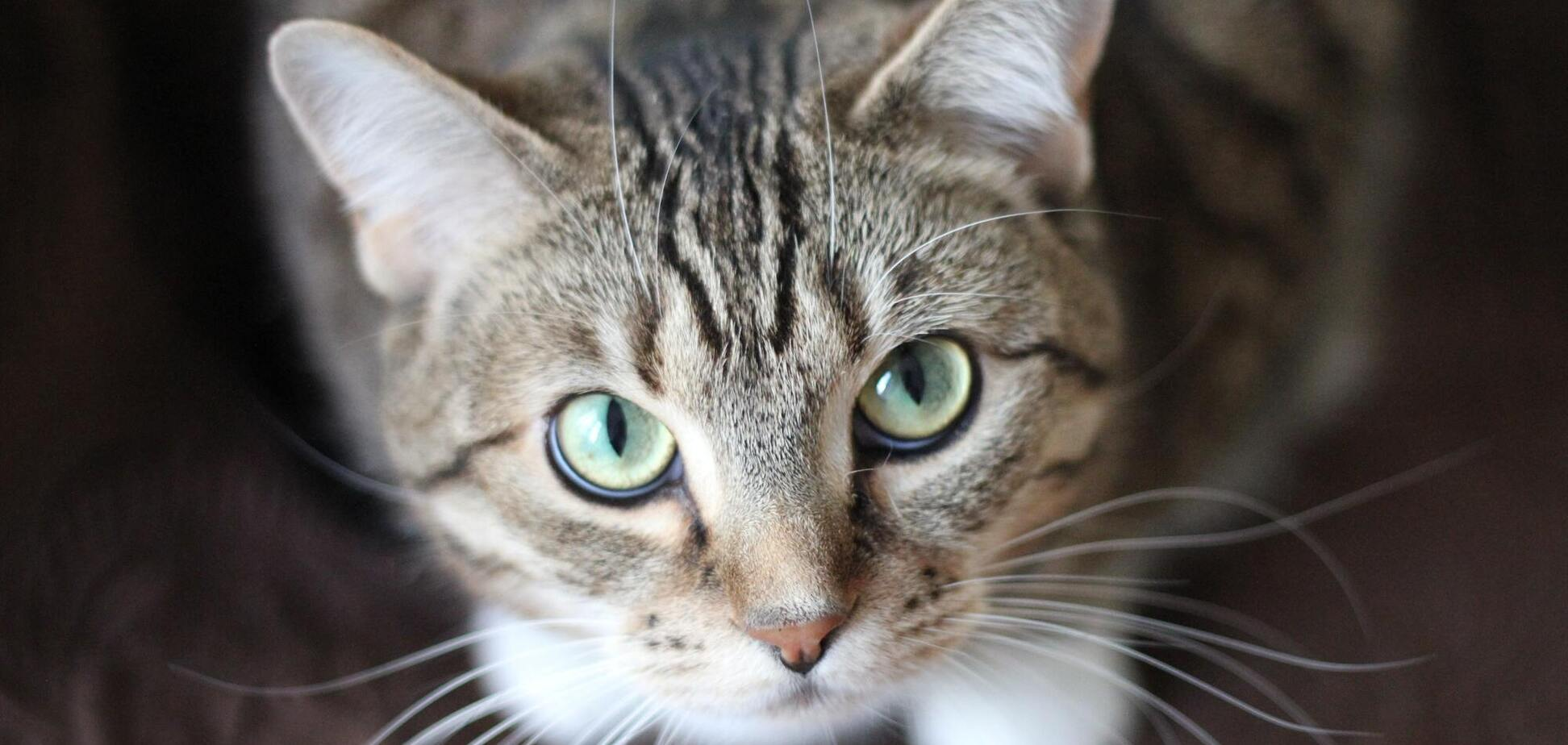 Кіт-акробат розсмішив клас під час онлайн-уроку. Відео